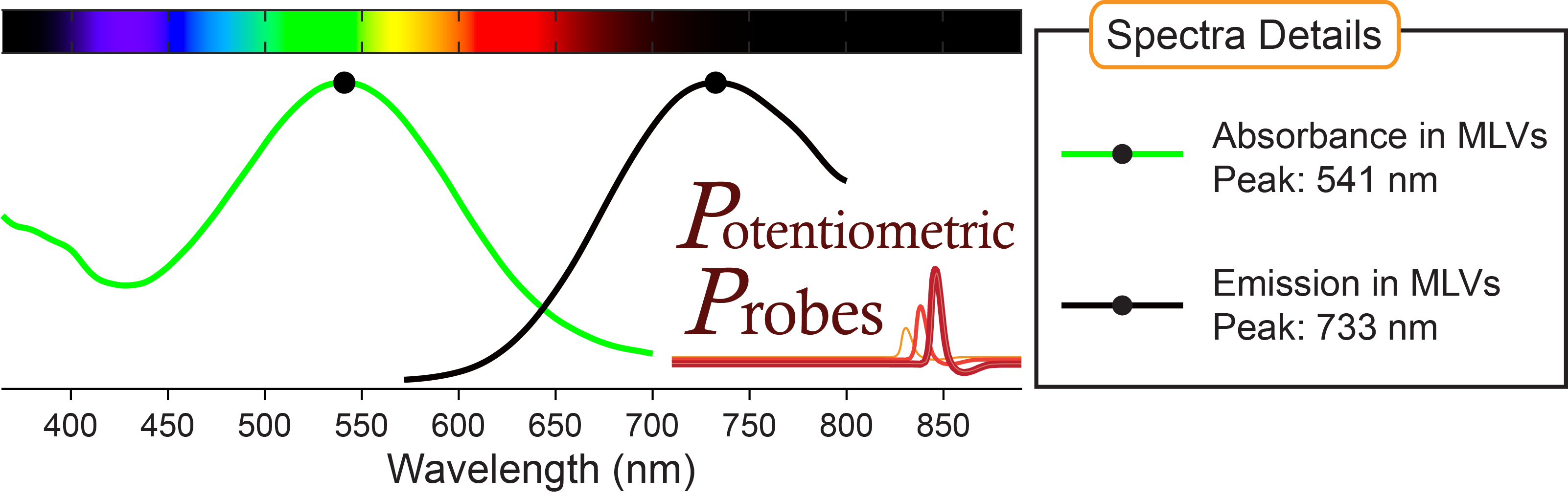 Spectra of voltage-sensitive dye Di-4-ANBDQPQ from Potentiometric Probes