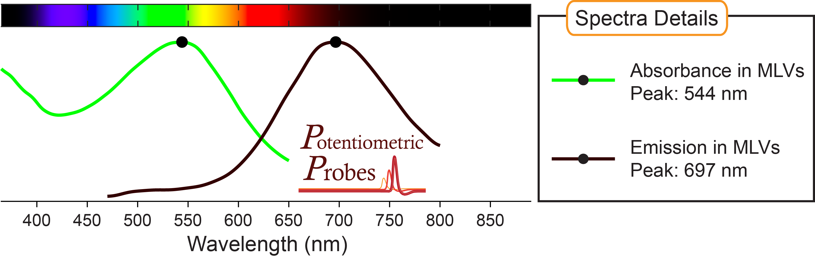 Spectra of voltage-sensitive dye Di-4-ANEQ(F)PTEA from Potentiometric Probes