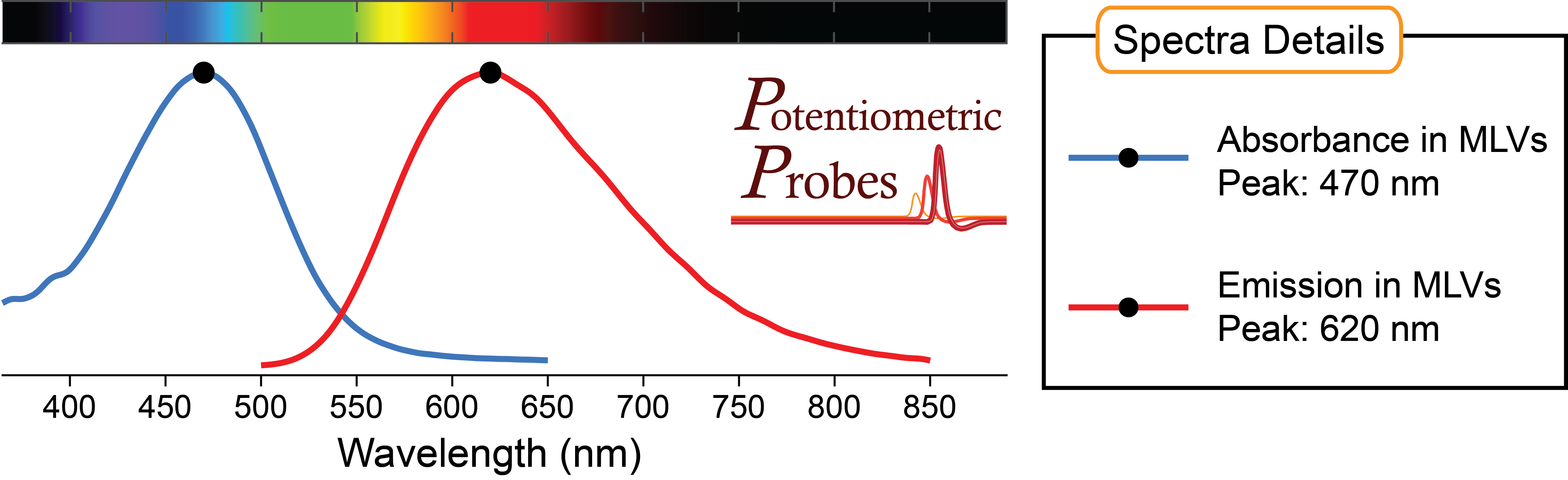 Spectra of voltage-sensitive dye Di-2-AN(F)EPPTEA from Potentiometric Probes